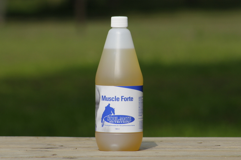 muscle-forte